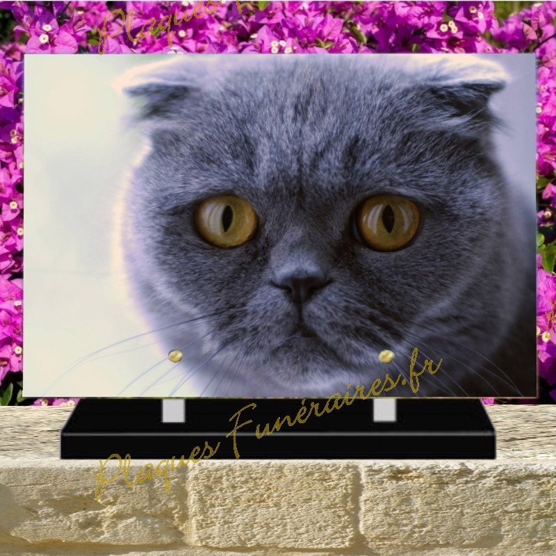 PLAQUE FUNÉRAIRE PLEXI CHAT SCOTTISH FOLD