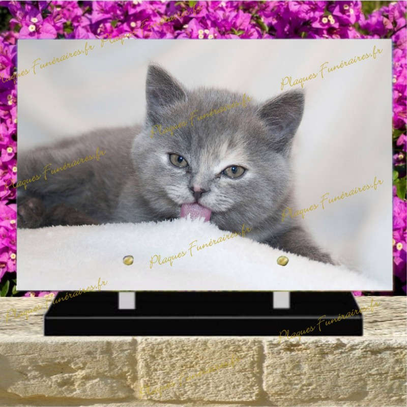 PLAQUE FUNÉRAIRE PLEXI CHAT BRITISH SHORTHAIR